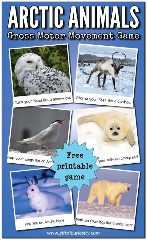best 25 arctic animals ideas on polar animals 857 | 8aace94b1f4c0e118f90469fead81ffb