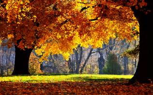 wedding backdrop design malaysia 25 stunning fall wallpapers