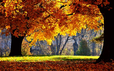 Autumn Wallpapers For Mac by 1920x1200 Autumn Falls Desktop Pc And Mac Wallpaper