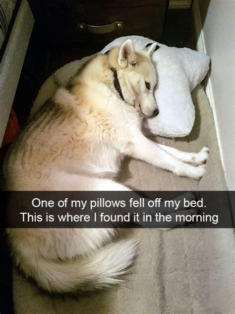 hilarious dog snapchats barnorama