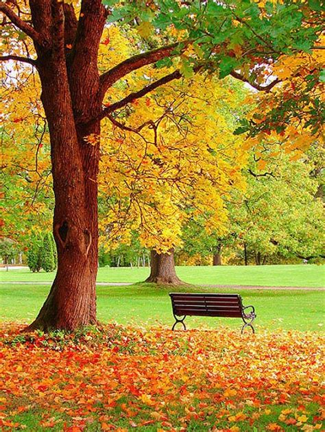 picture   beautiful park   painting