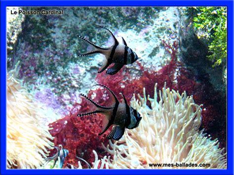 aquarium de boulogne sur mer tarif 28 images boulogne sur mer pas de calais the national