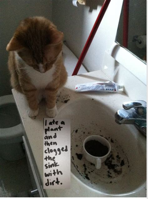 cats  funny   arent   pics