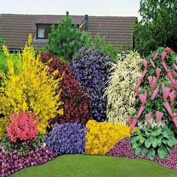 Best 20+ Garden Shrubs Ideas On Pinterest Shrubs