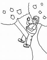 Tree Coloring Boy Climbing Apple Eating 759px 54kb sketch template