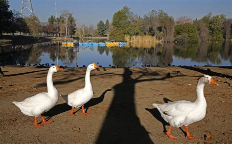 Paddle Boat Rentals Los Angeles by A Lakeside Hike At Whittier Narrows Recreation Area