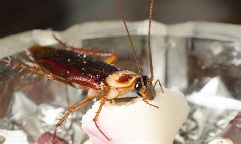 stopper l invasion de blattes la pause jardin