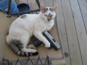 cat gun cats with guns pictures to pin on pinsdaddy