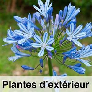 Fausse Plante Verte : plante verte d ext rieur fleuriste bulldo ~ Teatrodelosmanantiales.com Idées de Décoration