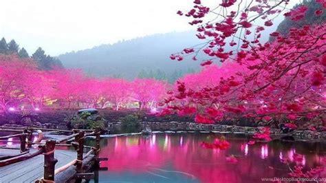 Anime Cherry Blossom Wallpaper - cherry blossom wallpapers high quality