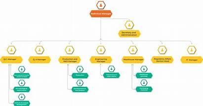 Pharma Dallah Structure Organizational Chart Factory