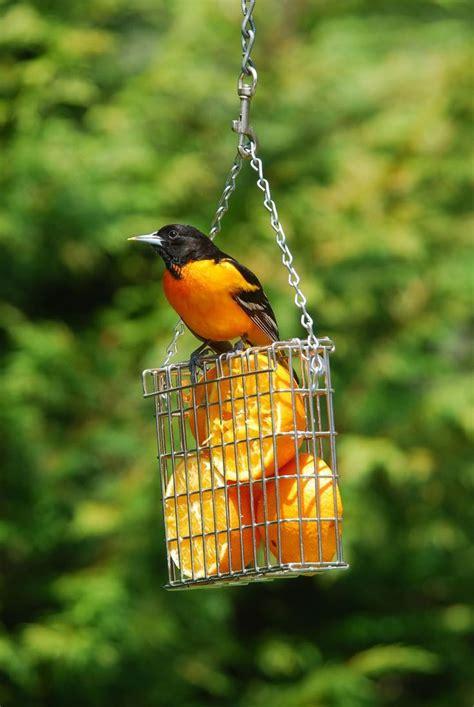 Best 20 Wild Birds Ideas On Pinterest