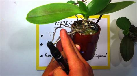 comment garder une orchidee fleurie latelier des fleurs