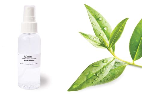 tea tree hydrosol from ahimsa oils