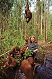 A Quest to Save the Orangutan | Science | Smithsonian