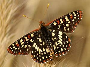 Funny Image Collection  Butterfly Wallpaper For Walls
