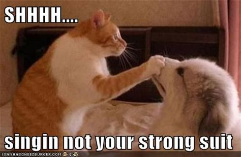 Singing Cat Meme - shut up you can t sing my noisy and annoying neighbors