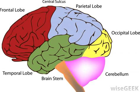 what are the different types of brain surgery for seizures