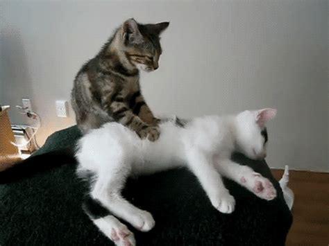 funny cat gifs  gifs