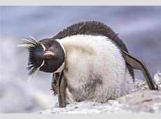 Fun Holiday – Penguin Awareness Day