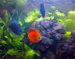 Aquarium Gestaltung Bilder : aquarium richtig einrichten ~ Lizthompson.info Haus und Dekorationen
