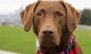 Upward Dog Walker – Your Dog's Other Best Friend