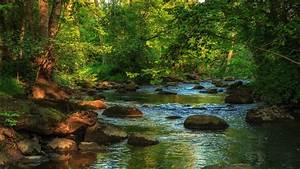 Forest Creek Wallpaper and Background Image