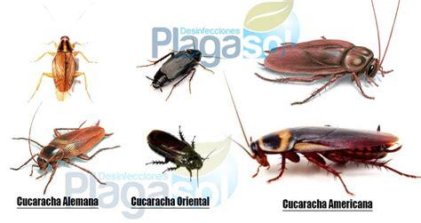 tipos de cucarachas domesticas en andalucia control de