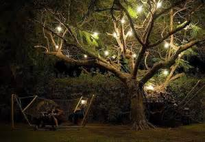 outdoor tree lights let there be light trees the o 39 jays and the tree