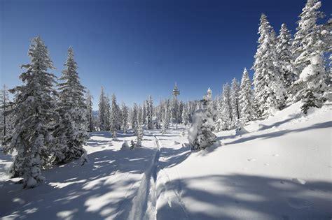 die magie stiller winterlandschaften langlauf  magazin