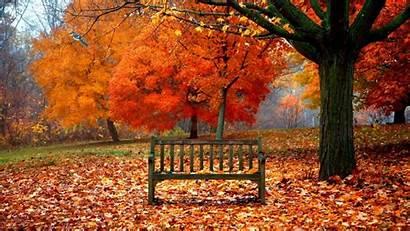 Fall Autumn Thanksgiving 3d Wallpapers Woods Nature