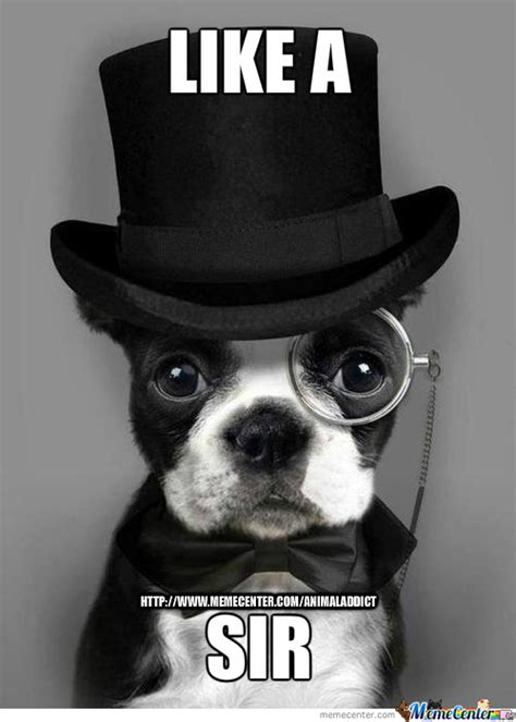 Like A Sir Meme - like a sir by animaladdict meme center
