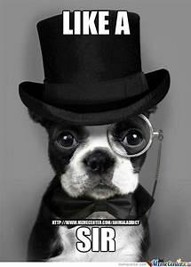 Like A Sir by animaladdict - Meme Center