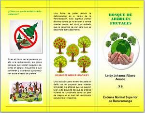 How To Print A Prezi Folleto Brochure Arboles Frutales Y Deforestación