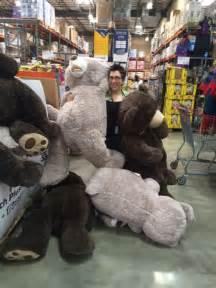 Costco Bear