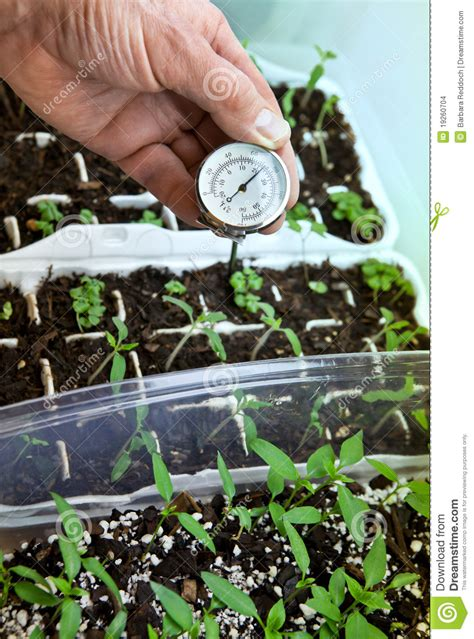 starting vegetable seedlings indoors stock images image