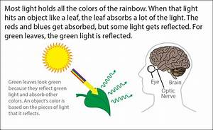 Biology Reading Flashcards - Seeing Color
