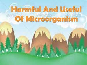 Harmful and Usage of microorganism