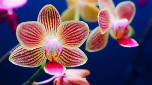 5 Ways To Keep Your Orchid Alive