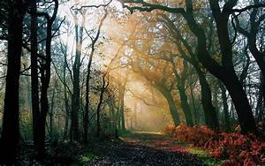 Through the woods of the beautiful sunshine HD wallpaper 5 ...