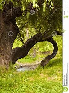 Jena Paradies Park : weeping willow on the saale stock images image 29488784 ~ Orissabook.com Haus und Dekorationen