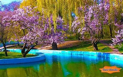 Spring Park Blossoms Sakura Screensavers Screensaver Desktop