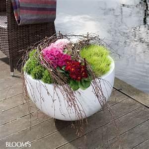 Kübel Bepflanzen Ideen : bloom 39 s album ~ Buech-reservation.com Haus und Dekorationen