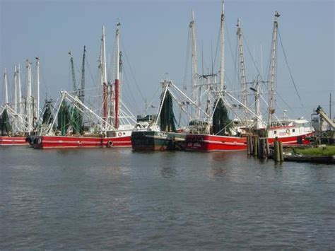 Shrimp Boats For Sale In Houma Louisiana by Shrimp Boats Along The Bayou Picture Of Terrebonne
