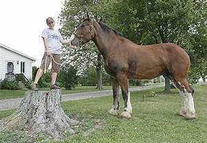 Could This Be The Next World's Tallest Horse? – Horse Canada
