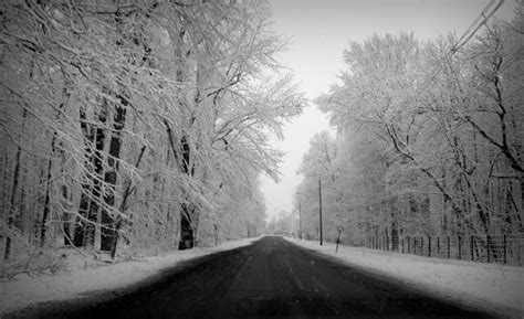 Black And White Snow Gypsy