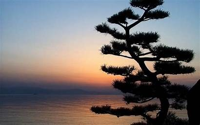 Bonsai Tree Wallpapers Nature Sunset