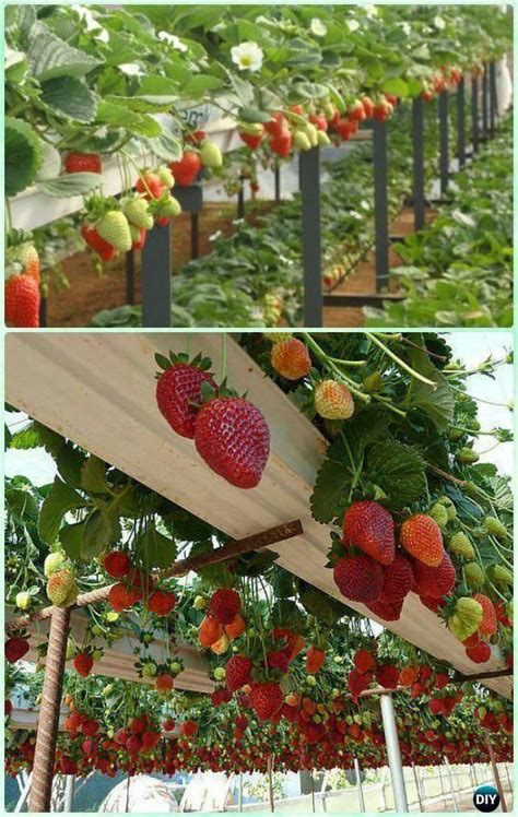Vertical Gardening Strawberries by 25 Best Ideas About Hydroponics On Diy