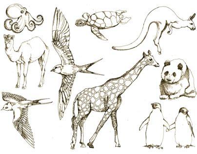 animal drawings  behance