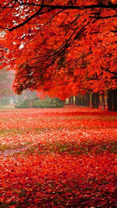 Nature Iphone Autumn Foliage Leaf Tree Park